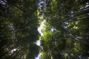 Tall Trees, concept: More Resilient World
